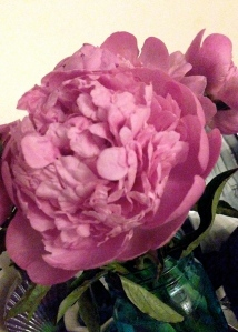 Peony delivery from a friend across the country!